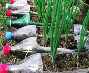 bottle garden